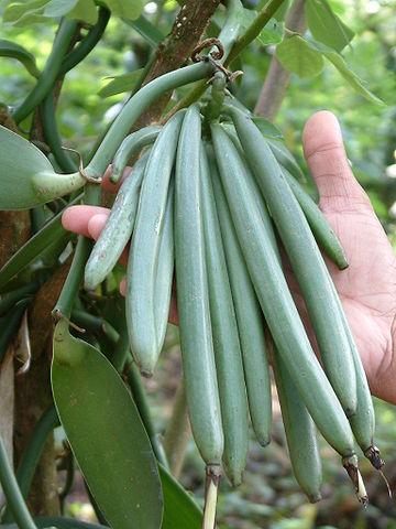 Vanilla_beans